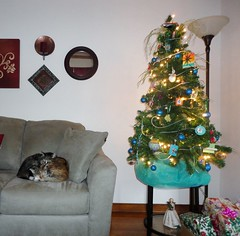 Mound of Cats by the Christmas Tree