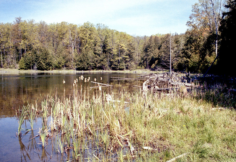 East End of Karsten's Lake_