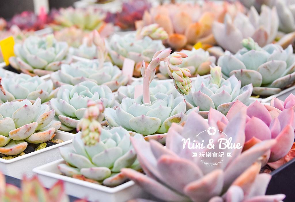 蘭心花卉 多肉植物14