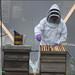 Beekeeping demonstration