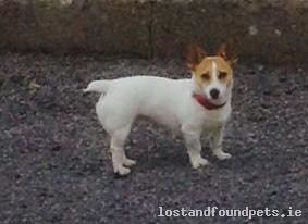 Thu, Jun 7th, 2018 Lost Female Dog - Sligo Yacht Club, Sligo