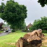 Oak tree 151/365 (4)
