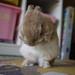 MoFuMoFu!! by tamchan25