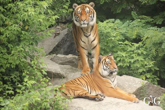 Zoo und Tierpark 03.06.201846