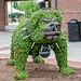 Bulldog Topiary
