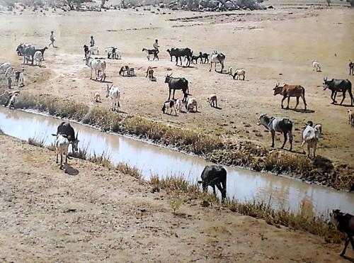 कोलार जिले का मिट्टी भरा तालाब