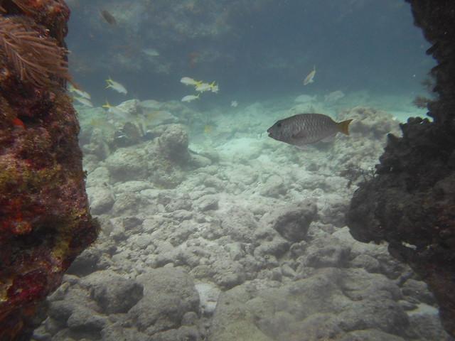 Unknown Fish Identification Spanish Anchor Molasses