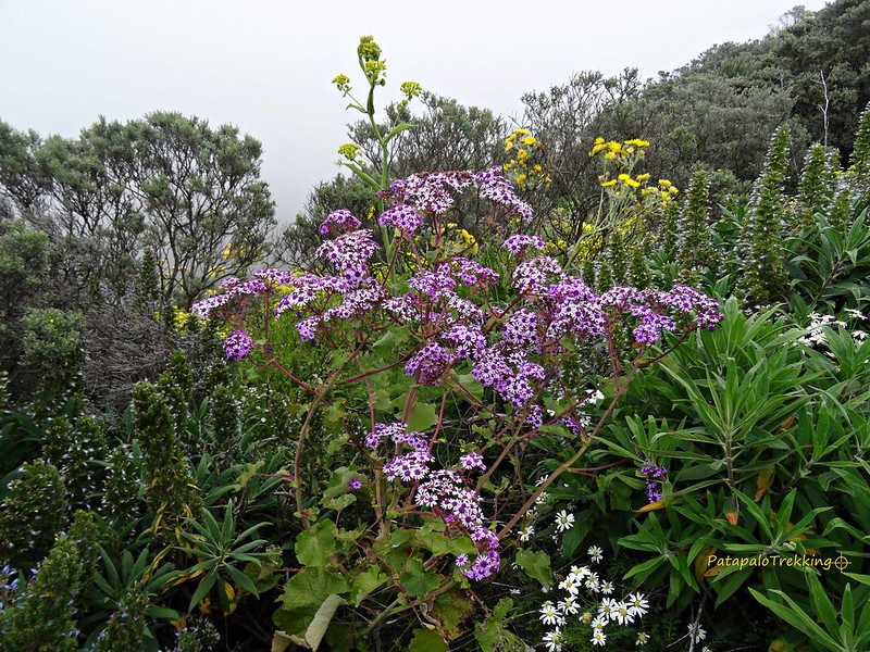 50a Jardín primaveral