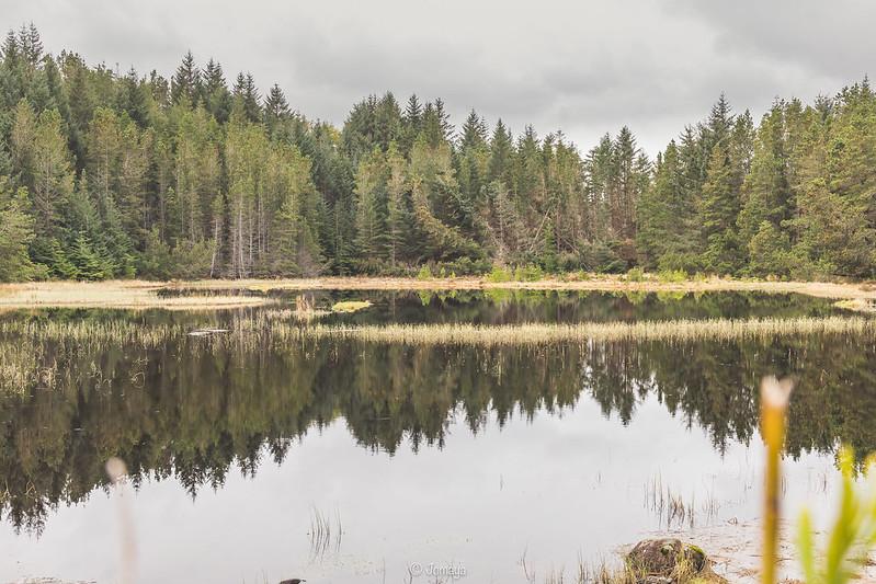 Laide Woods - Scotland 2017