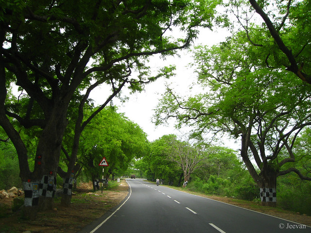 Richness of green, what gonna miss if a 8 lane road is commissioned