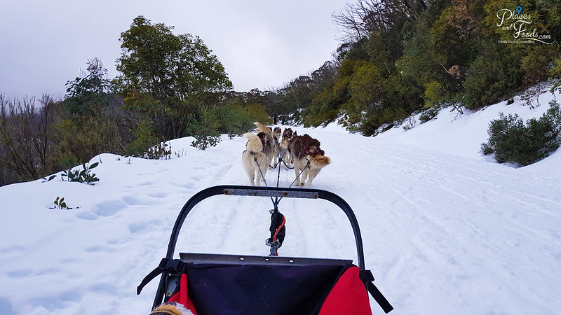 mount buller huskies
