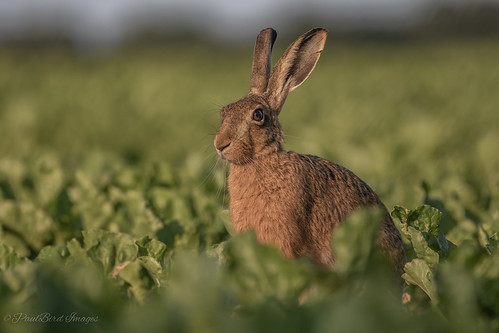 Hare of a time