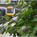 Snail by rail