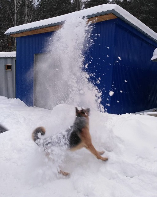 Altaj_and_snow