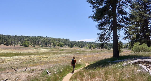 Walking upper Laguna meadow