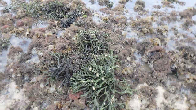 Various seaweeds and sponges growing on reef edge