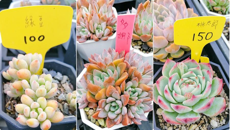 蘭心花卉 多肉植物02