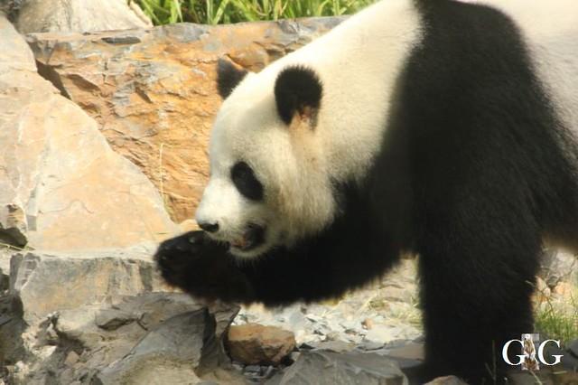 Besuch Zoo Berlin 10.06.201815