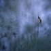 Crepuscule by donlope1