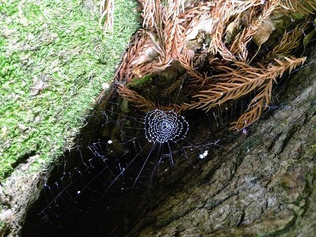 湧谷山 蜘蛛の巣