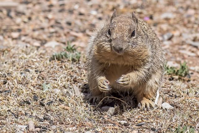 Squirrel-7-7D2-052818