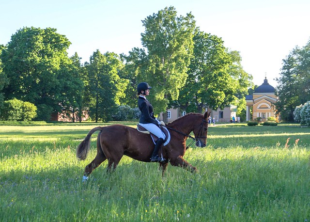 Уроки верховой езды в музее-заповеднике Тарханы, фотоиллюстрации индивидуальных занятий конным спортом 10