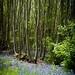 Norsey Wood