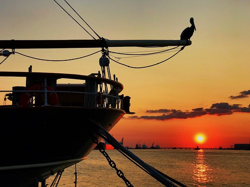 sunset pelican elissa tallshipelissa 1877 barque tallship sailing galveston texas usa gulfofmexico gulfcoast gulf boat vessel ship bird sailboat