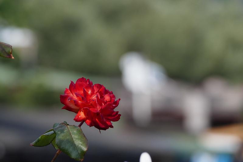 P9130168_1