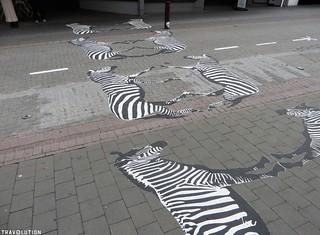 Zebras in Queenstown