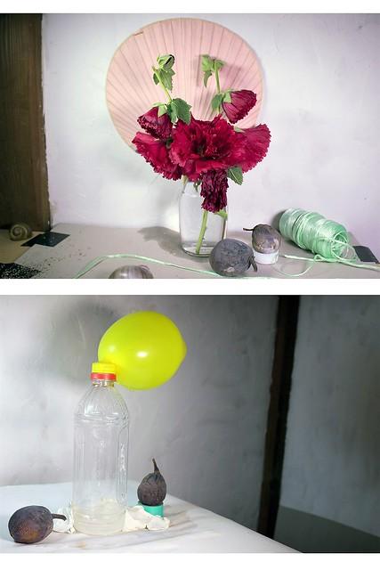Elisabeth Belliveau 個展「Itoshima Still Life」を開催します