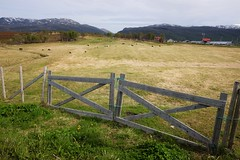 Gate and sheep