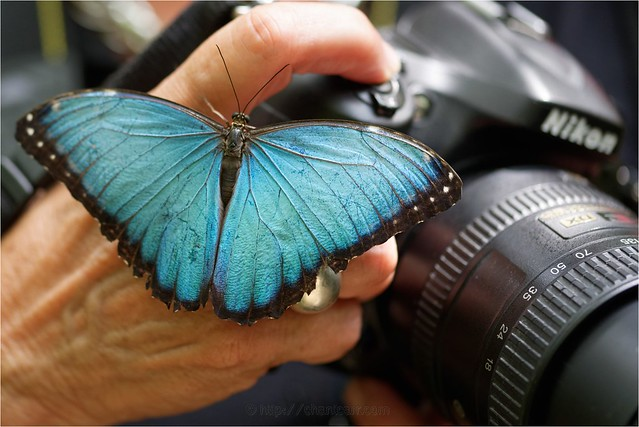 La Serre aux Papillons, Nikon D750, Sigma Macro 105mm F2.8 EX DG OS HSM