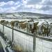 Shirenewton Infrared panorama