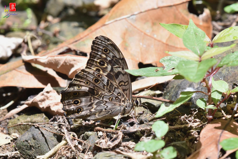 Butterfly_5605