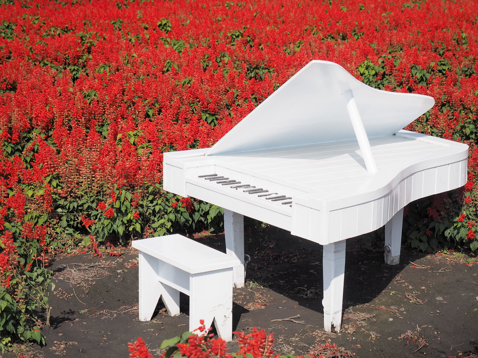 A white grand piano in the sea of flowers for photography.