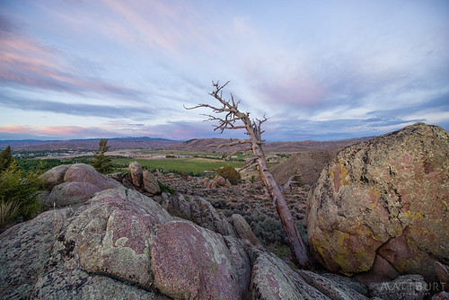 hartmanrocks deadtree sunset
