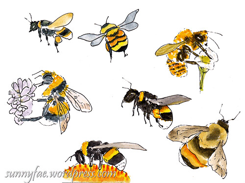sketches of bees 1