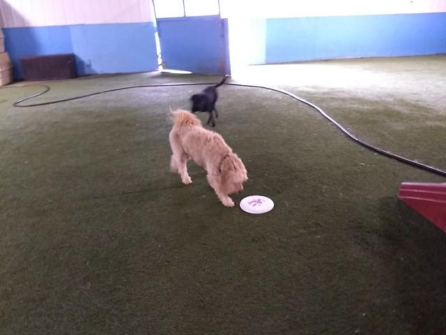 06/03/18 Frisbee Play :D