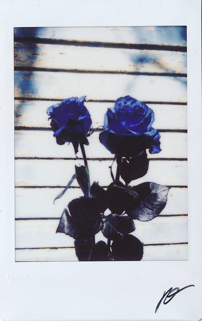 "Fujitivas_34 ""Blue Rose"""