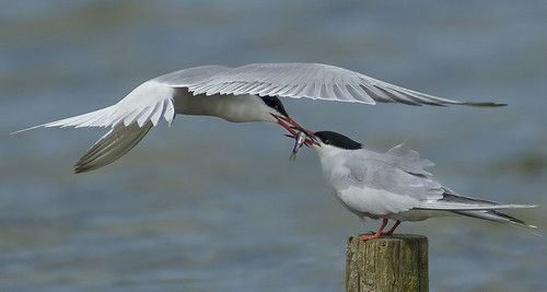 Terns - Devotion then gone and forgotten