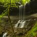 Woodland Wonder by Matt Champlin