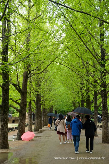 Tourists at Nami Island