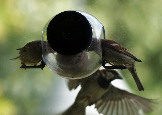 birdfeederC03800