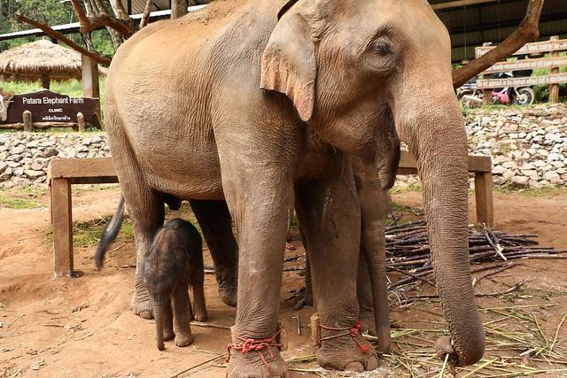 20171106_359 Elephant Bath