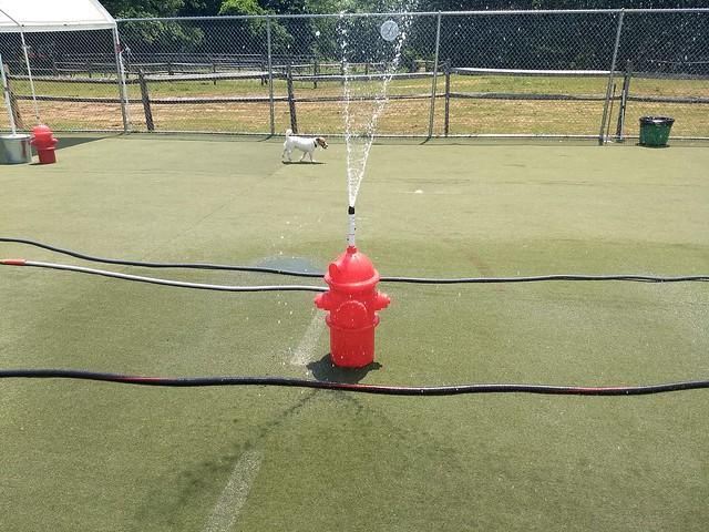 06-07-18 Water fun!