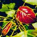 Vibrant new leaf