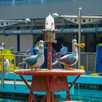 Primary photo for Day 11 & 12 - Disneyland Resort
