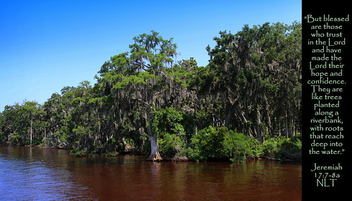 stjohns stjohnsriver stjohnscounty jacksonville riverbank river trees forest woods shore bank brackish water nature cypress foliage lush florida fl us usa unitedstates america peaceful serenity quiet jesus christ christian christianity bible scripture