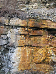 Bleeding unconformity (Chattanooga Shale over Cumberland Formation; Burkesville West Rt. 90 roadcut, Kentucky, USA) 13
